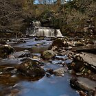 Cotter Force by paula smith