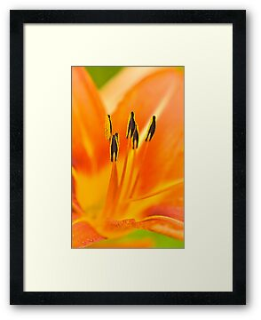 Psychedelic Daylily by onyonet photo studios