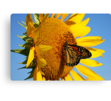 Sitting Pretty on a Sunflower Canvas Print