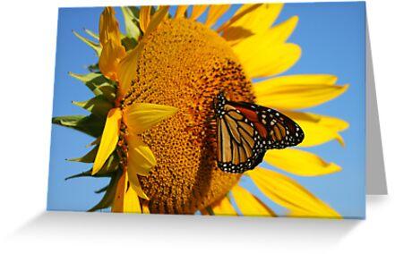 Sitting Pretty on a Sunflower by Rachel Stickney