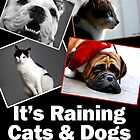 It&#x27;s Raining Cats &amp; Dogs - Calendar  by Marcia Rubin