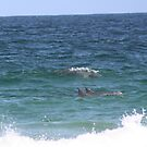 Dolphins at Zenith Beach by lisacorc