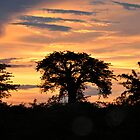 Baobab on fire by Gigi Guimbeau