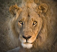 The Young King of Moremi, Botswana by Neville Jones