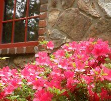 Azaleas by the Window by shimschoot