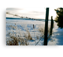Barbed Wire Fence Canvas Print