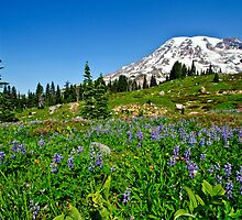 Rainier view from Paradise by Dan Mihai