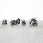 zebra.crossing by Nina Papiorek
