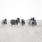 zebra.crossing by Nina Papiorek