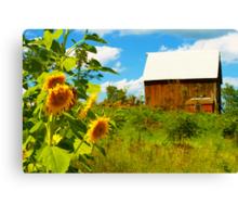 Sunny Hill Farm Canvas Print