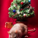 Christmas Ratty by PhotographerAri