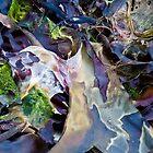 seaweed by helveticaneue