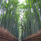 Arashiyama Bamboo Forest by Sam Ryan