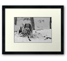 Snow Bath Framed Print