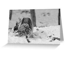 Snow Bath Greeting Card