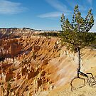 Dancing Pine at Bryce Canyon, Utah by Alex Cassels