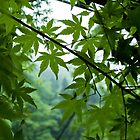 Leaves in Daigo by LauraMargaret
