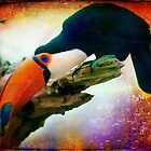 What Toucans do when no one's watching by alan shapiro