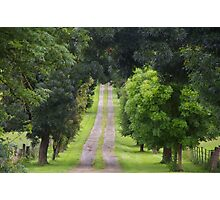 Seeking Green Tranquillity? It's Here On This Pathway Photographic Print