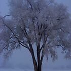 Frozen Tree by stacyrod