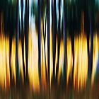 Magical forest Pano by Angela King-Jones