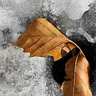 Leaf Duo on Ice by Lynda Lehmann