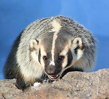 Badger (2) by Arla M. Ruggles
