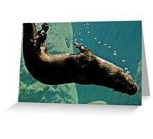 otter underwater with bubbles Greeting Card