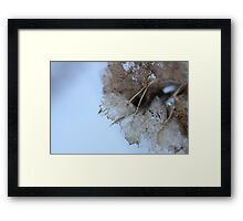 Winter Hydrangea  - JUSTART © Framed Print