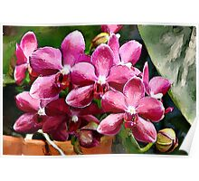 Red Phalaenopsis watercolour Poster