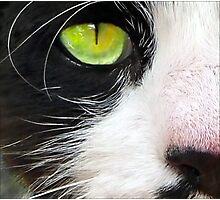 Cat's Eye Photographic Print