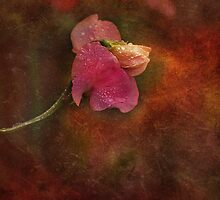 Bedraggled Sweet Pea by hampshirelady