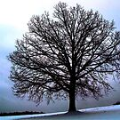 January Tree by vigor