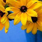 Haymarket Flower 1 by Chris Pultz