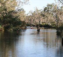 Major Creek Reserve, Victoria by aussiebushstick