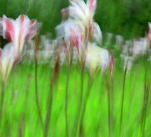 Le Jardin de Renoir by Cade Turner