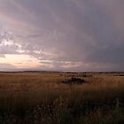 Storm brewing by saltbushbill
