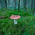 A big Russula by finnarct