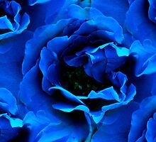 The Blue Rose by TeAnne