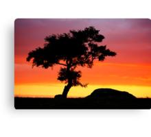 The Tree at Dog Rocks Geelong Victoria Canvas Print