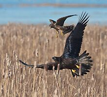 Defending Territory by David Friederich