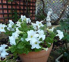 White Petunias by joycee