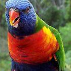 Rainbow Lorakeet - Parrot, NSW, Australia. by Angela Gannicott