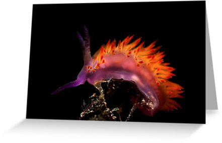 Flaming Tongue by MattTworkowski