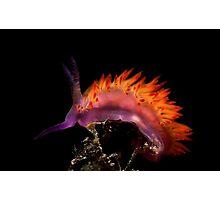 Flaming Tongue Photographic Print
