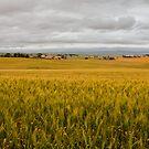 Golden Hills by Heath Carney