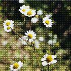 Tiled Daisys by Joanna-Marie
