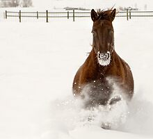 Winter Gallop by Kathy Cline