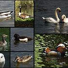 Wildfowl Collage by Chris Day