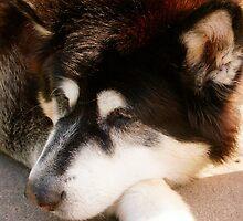 Alaskan Malamute by Karen  Rubeiz